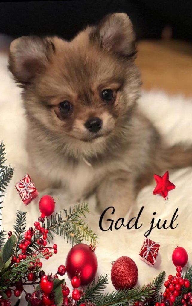 en julbild på Bailey
